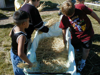 Boys threshing wheat